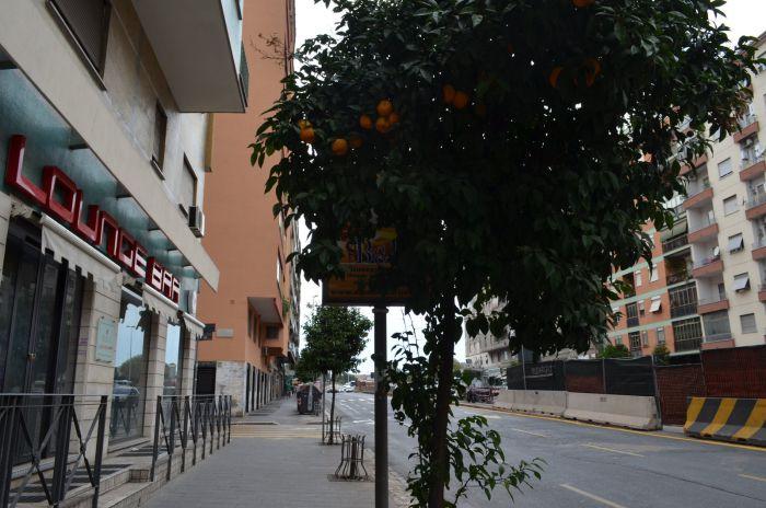 Římské pomeranče