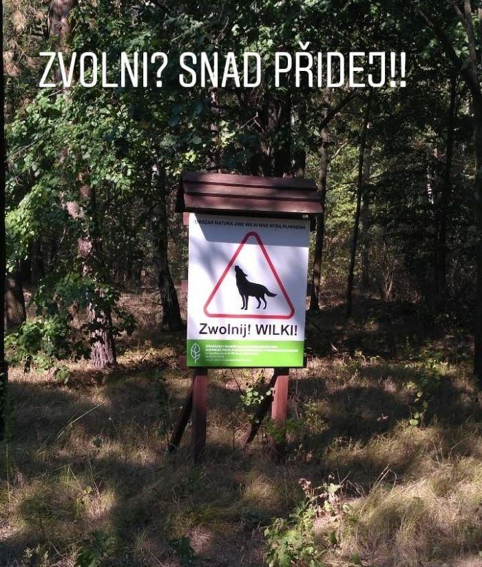 Vlci v Polsku